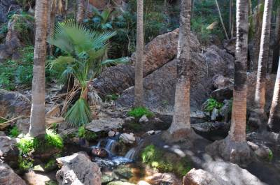 b2ap3_thumbnail_0367-Zebedee-Thermal-Springs---El-Questro.JPG