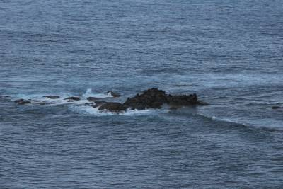 b2ap3_thumbnail_2200-Seals-at-Cape-Naturaliste.JPG